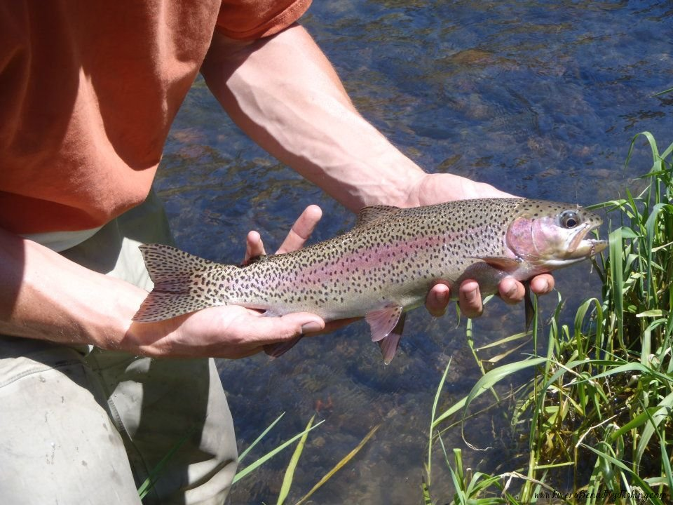 65 for Deschutes river fishing report